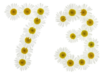 Arabic numeral 73, seventy three, from white flowers of chamomile, isolated on white background
