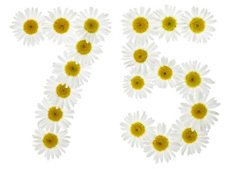 Arabic numeral 75, seventy five, from white flowers of chamomile, isolated on white background
