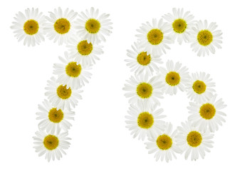 Arabic numeral 76, seventy six, from white flowers of chamomile, isolated on white background