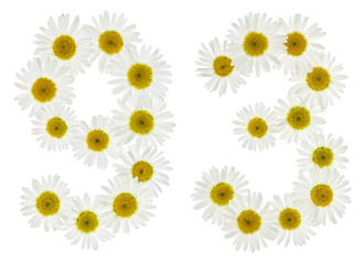 Arabic numeral 93, ninety three, from white flowers of chamomile, isolated on white background