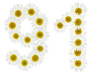 Arabic numeral 91, ninety one, from white flowers of chamomile, isolated on white background