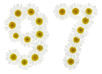 Arabic numeral 97, ninety seven, from white flowers of chamomile, isolated on white background