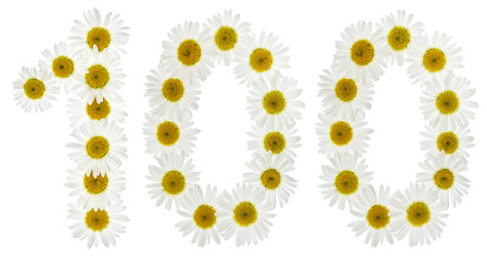Arabic numeral 100, one hundred, from white flowers of chamomile, isolated on white background