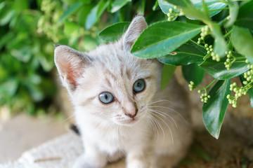Baby cats in the garden