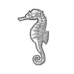 Sea Horse. Vector black engraving vintage illustrations.
