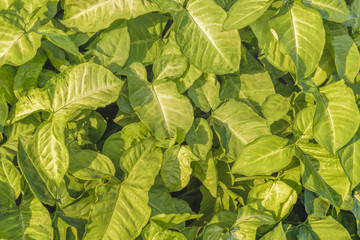 Tropical Plants Close Up View
