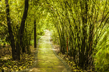 Stone path through a bamboo forest in China