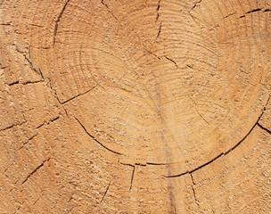 Close-up texture of a tree