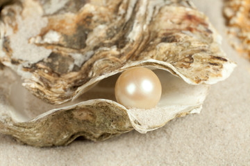 Pearl in oyster