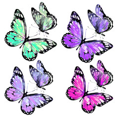 beautiful color butterflies,watercolor,isolated on a white