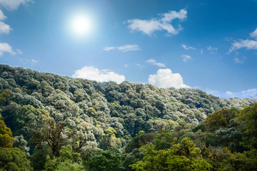 View of mountain forest landscape under sunlight in the middle of the summer with heavy blue sky as a background.