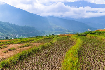Close up image of a rice field in Punakha, Bhutan.