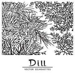 Herb of Dill. Vector Illustration on a White Background.