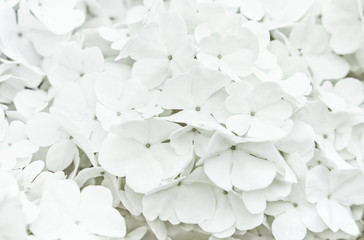 White Flowers Blur Background