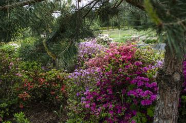 Colorful flowersin the park. Spring landscape.