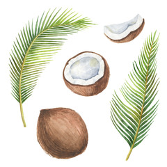 Watercolor organic set of coconut and palm trees isolated on white background.