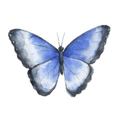 Blue watercolor butterfly isolated on white background.