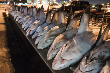 Sharks ready for finning at the Dubai Fish Market