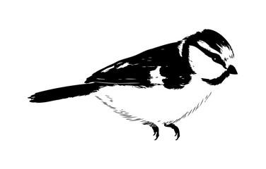 Bird art illustration