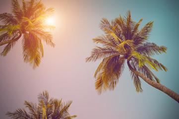 coconut tree at tropical coast, Vintage Tones,Warm tones