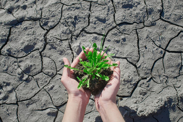 Top view of plant in hands on a background of cracked soil