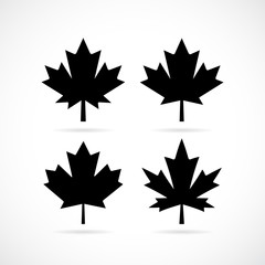 Maple tree leaf vector set