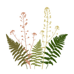 Vector floral illustration with  fern leaves and shepherd's purse flowers silhouettes .
