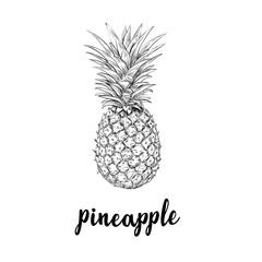 Pineapple sketch is a vintage drawing.