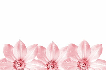 flower texture background with text copy space
