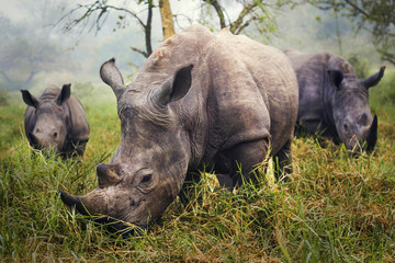Photo sur Plexiglas Rhino The Power of Few