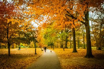 Canvas Prints Autumn fall
