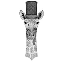 Camelopard, giraffe wearing cylinder top hat