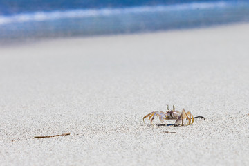 Crab on beach with white sand and blue sea contrast background