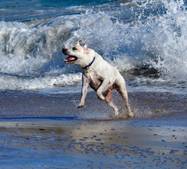 Dog Playing with Waves