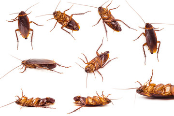 Set of  Cockroach and roach eggs on white background