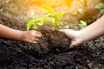 Child and parent hand planting young tree on black soil together as save world concept in vintage color tone