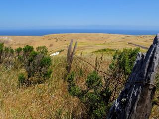 Coastal Old Fenceline
