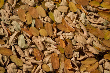background autumn leaves on ground