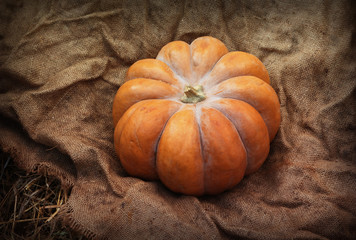 Pumpkin on the wrinkled sacking
