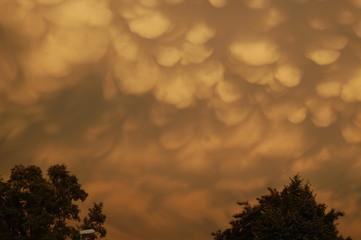 Mammuts Wolken über den Bäumen