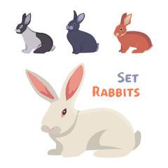 vector illustration of cartoon rabbits different breeds. Fine bunnys for veterinary design.