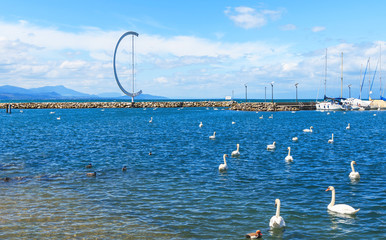 Beautiful swans on the lake Leman and part of port Ouchi