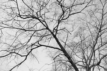 Dry tree branches in the forest, black and white.