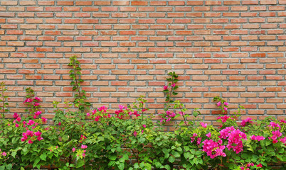 Brick wall background with flower.