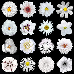 Mega pack of natural and surreal white flowers 16 in 1 isolated on black