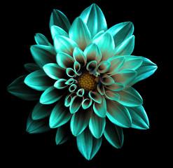 Poster Dahlia Surreal dark chrome turquoise flower dahlia macro isolated on black