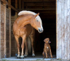 Horse with a rhodesian ridgeback puppy on black background.
