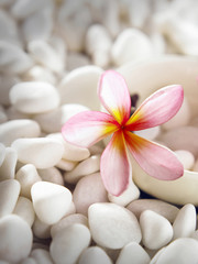 flower and pebbles on white stone