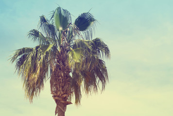 Palm tree against sky, toned. Sea tour, vacation
