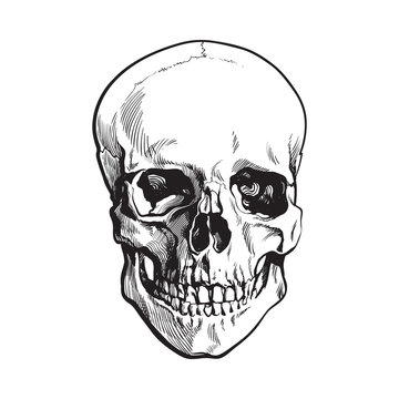 Hand drawn human skull, anatomical model, black and white sketch style vector illustration isolated on white background. Realistic front view hand drawing of human skull